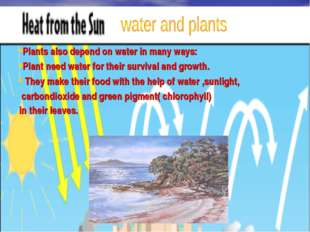 Water and Plants Plants also depend on water in many ways: Plant need water f