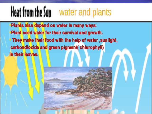 Water and Plants Plants also depend on water in many ways: Plant need water f...