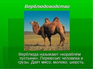 Верблюдоводство Верблюда называют «кораблём пустыни». Перевозит человека и гр