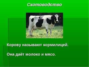 Скотоводство Корову называют кормилицей. Она даёт молоко и мясо.