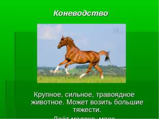 Коневодство Крупное, сильное, травоядное животное. Может возить большие тяжес