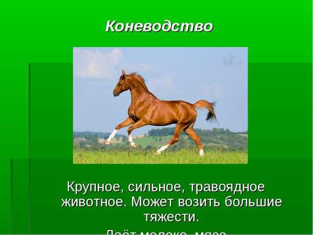 Коневодство Крупное, сильное, травоядное животное. Может возить большие тяжес...