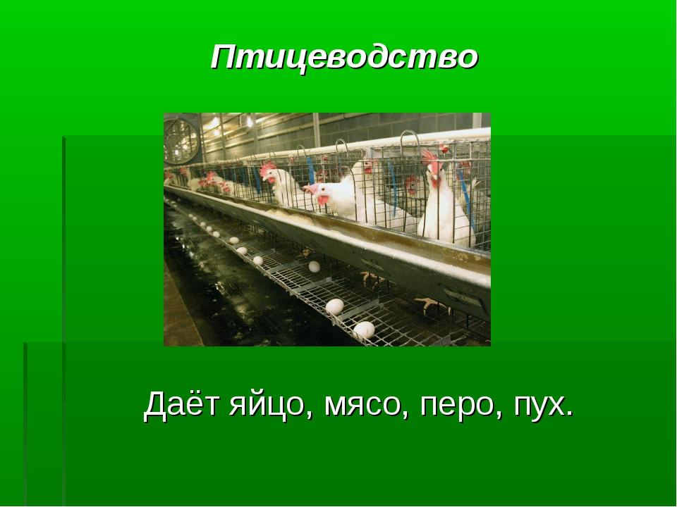 Птицеводство Даёт яйцо, мясо, перо, пух.