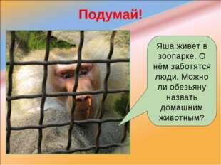 Подумай! Яша живёт в зоопарке. О нём заботятся люди. Можно ли обезьяну назват