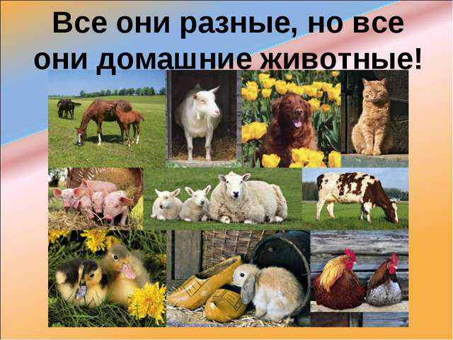 Все они разные, но все они домашние животные!