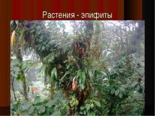 Растения - эпифиты
