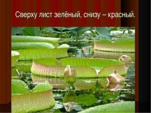 Сверху лист зелёный, снизу – красный.