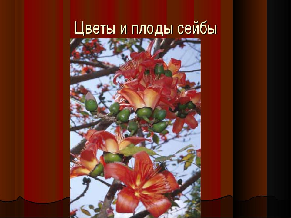 Цветы и плоды сейбы