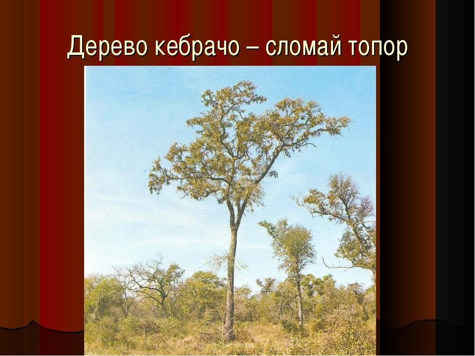 Дерево кебрачо – сломай топор