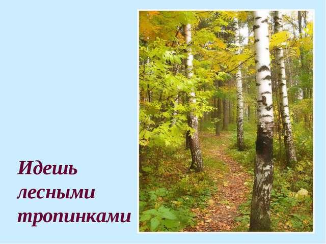 Идешь лесными тропинками