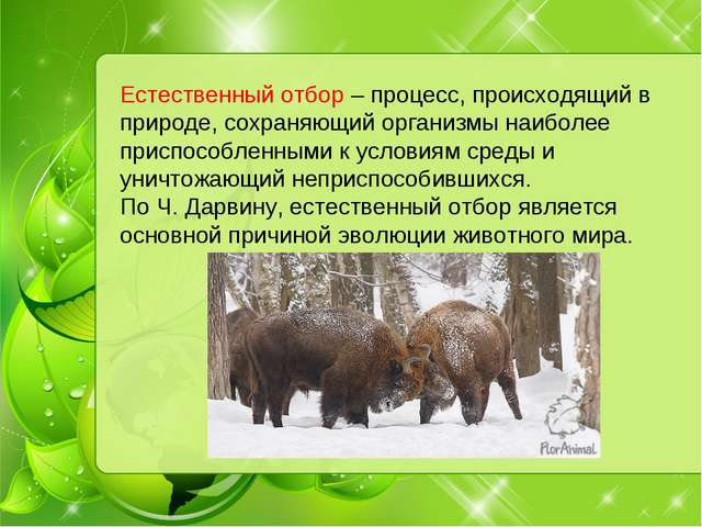 Естественный отбор – процесс, происходящий в природе, сохраняющий организмы н...