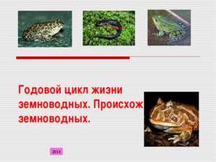 Годовой цикл жизни земноводных. Происхождение земноводных. 2014