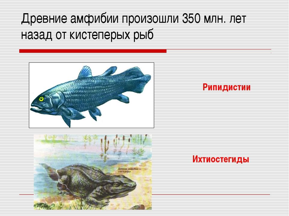 Древние амфибии произошли 350 млн. лет назад от кистеперых рыб Рипидистии Ихт...