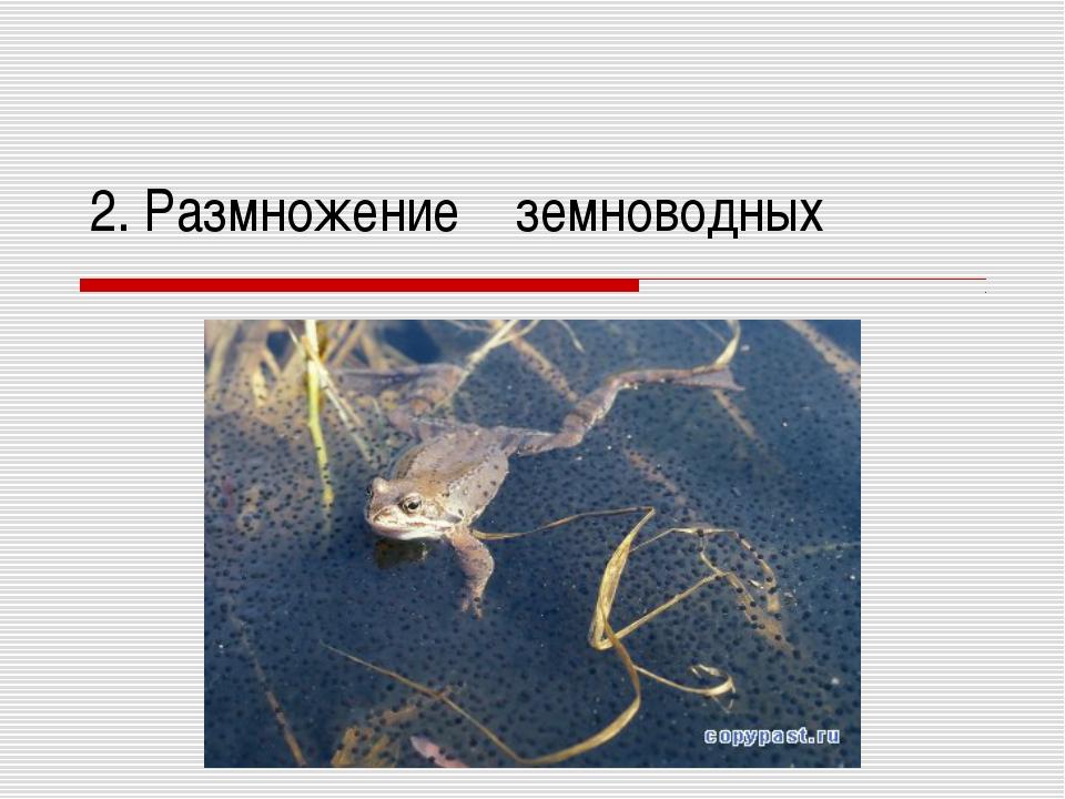 2. Размножение земноводных