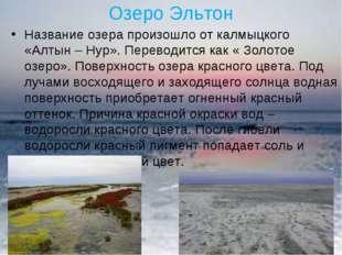 Озеро Эльтон Название озера произошло от калмыцкого «Алтын – Нур». Переводитс