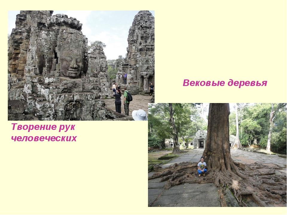 Творение рук человеческих Вековые деревья