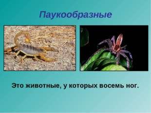 Паукообразные Это животные, у которых восемь ног.