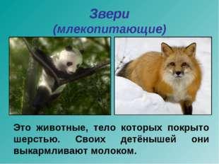 Звери (млекопитающие) Это животные, тело которых покрыто шерстью. Своих детён