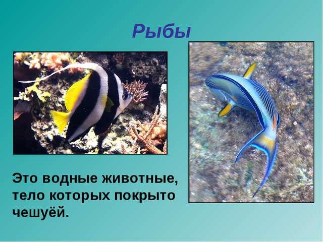 Рыбы Это водные животные, тело которых покрыто чешуёй.