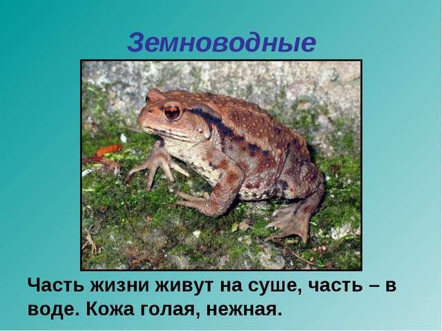 Земноводные Часть жизни живут на суше, часть – в воде. Кожа голая, нежная.