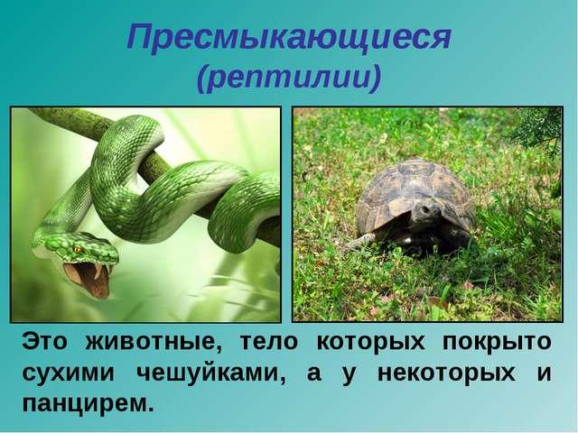 Пресмыкающиеся (рептилии) Это животные, тело которых покрыто сухими чешуйками...