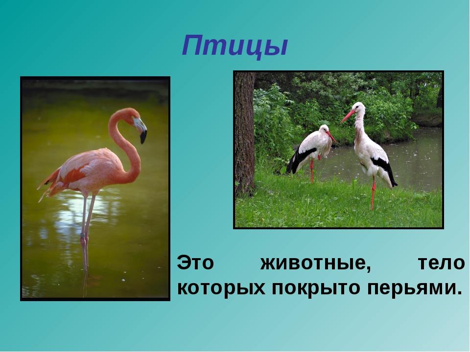 Птицы Это животные, тело которых покрыто перьями.