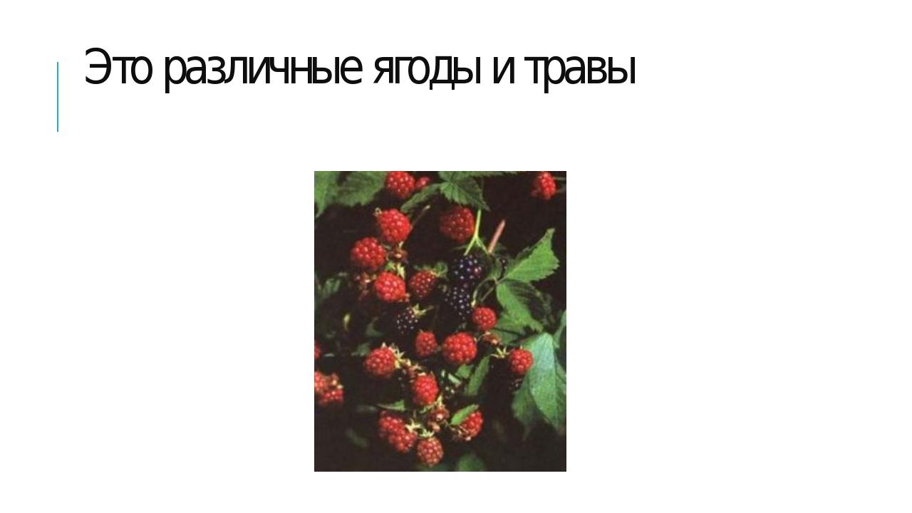 Это различные ягоды и травы