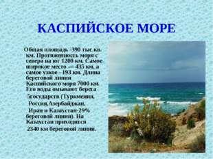 КАСПИЙСКОЕ МОРЕ Общая площадь -390 тыс.кв. км. Протяженность моря с севера на