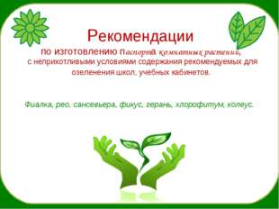 Рекомендации по изготовлению паспорта комнатных растений, с неприхотливыми у