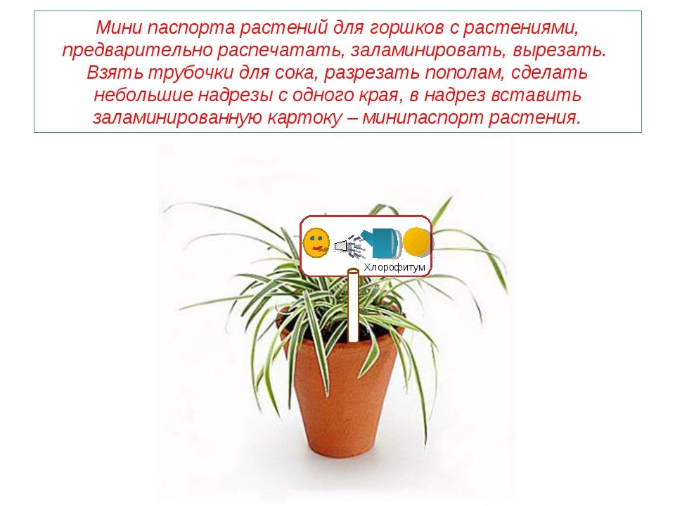 Мини паспорта растений для горшков с растениями, предварительно распечатать,...