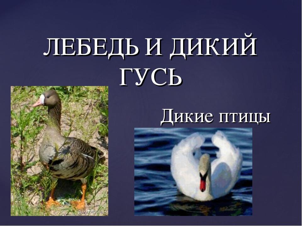 ЛЕБЕДЬ И ДИКИЙ ГУСЬ Дикие птицы {