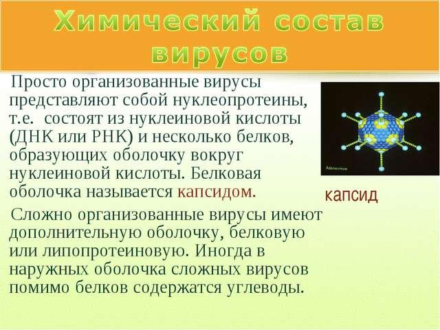 Просто организованные вирусы представляют собой нуклеопротеины, т.е. состоят...