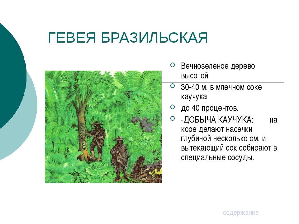 ГЕВЕЯ БРАЗИЛЬСКАЯ Вечнозеленое дерево высотой 30-40 м.,в млечном соке каучука...