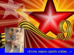 «Есть герои среди собак…»