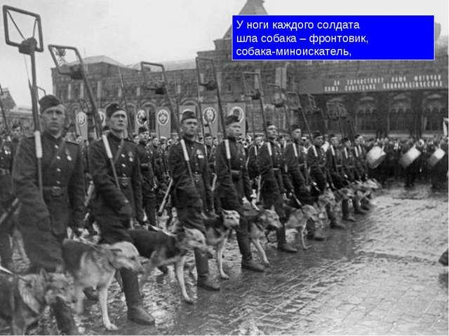 У ноги каждого солдата шла собака – фронтовик, собака-миноискатель,