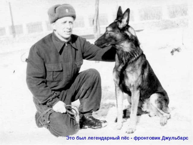 Это был легендарный пёс - фронтовик Джульбарс
