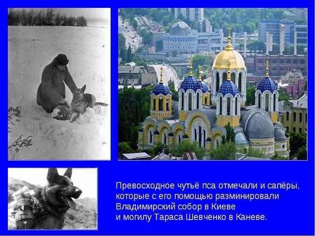 Превосходное чутьё пса отмечали и сапёры, которые с его помощью разминировали...