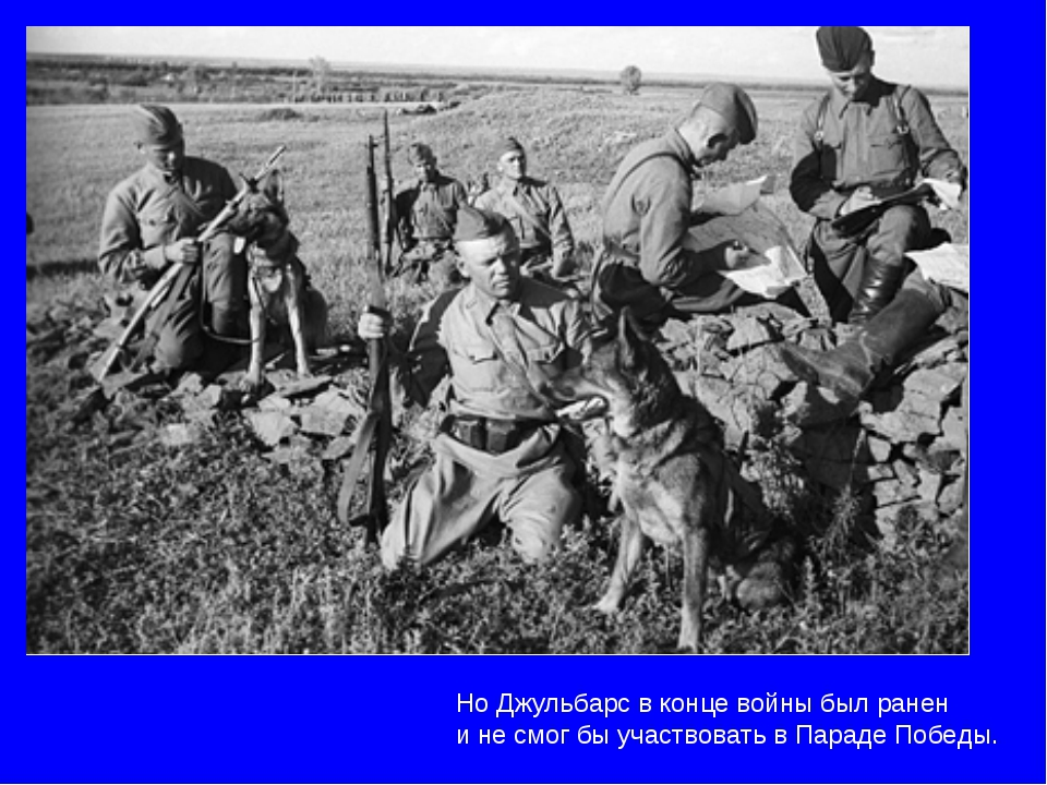 Но Джульбарс в конце войны был ранен и не смог бы участвовать в Параде Победы.
