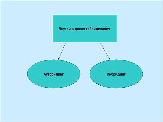 Внутривидовая гибридизация Аутбридинг Инбридинг