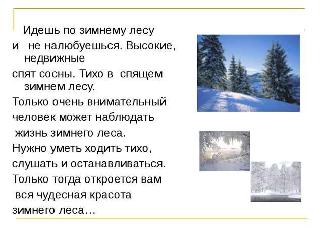Идешь по зимнему лесу и не налюбуешься. Высокие, недвижные спят сосны. Тихо...