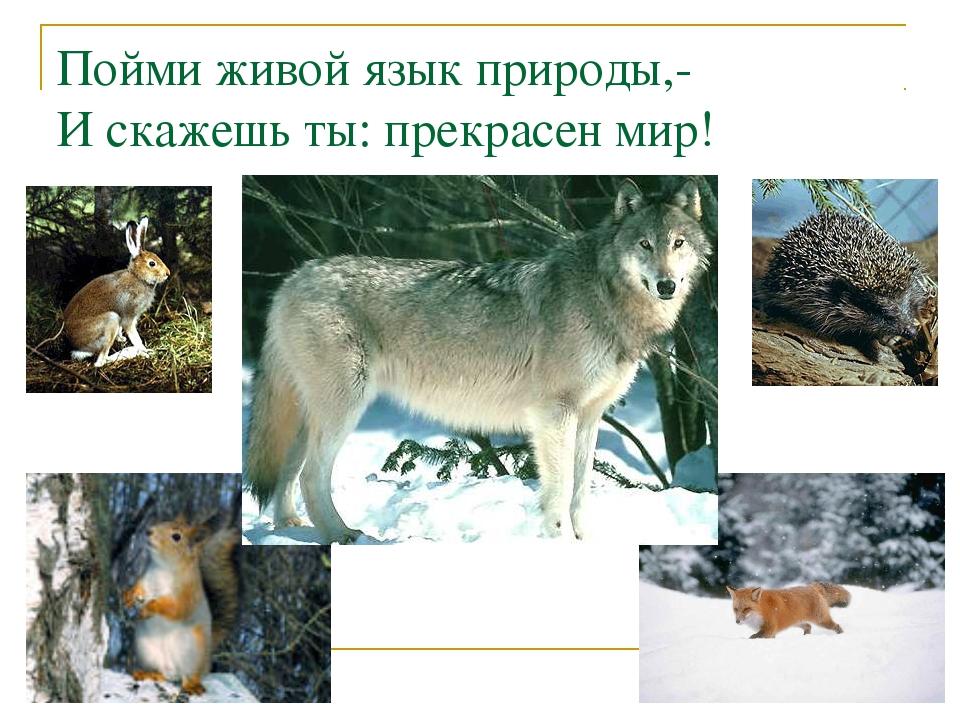 Пойми живой язык природы,- И скажешь ты: прекрасен мир!