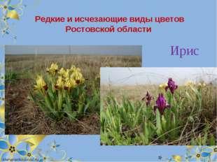 Редкие и исчезающие виды цветов Ростовской области Ирис