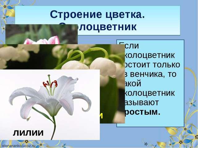 Строение цветка. Околоцветник Если околоцветник состоит только из венчика, то...