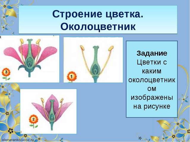 Строение цветка. Околоцветник Задание Цветки с каким околоцветником изображен...