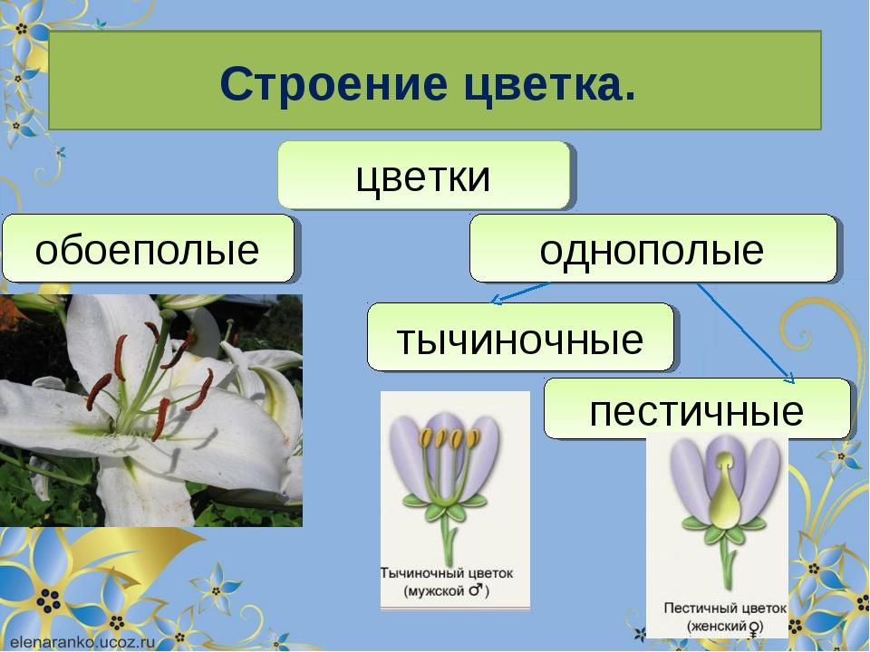 Строение цветка. цветки обоеполые однополые