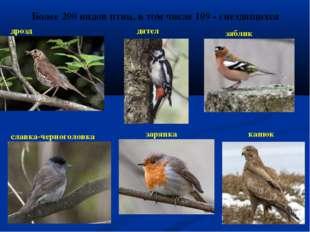 Более 200 видов птиц, в том числе 109 - гнездящихся дрозд дятел зяблик славка