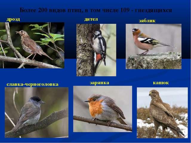 Более 200 видов птиц, в том числе 109 - гнездящихся дрозд дятел зяблик славка...