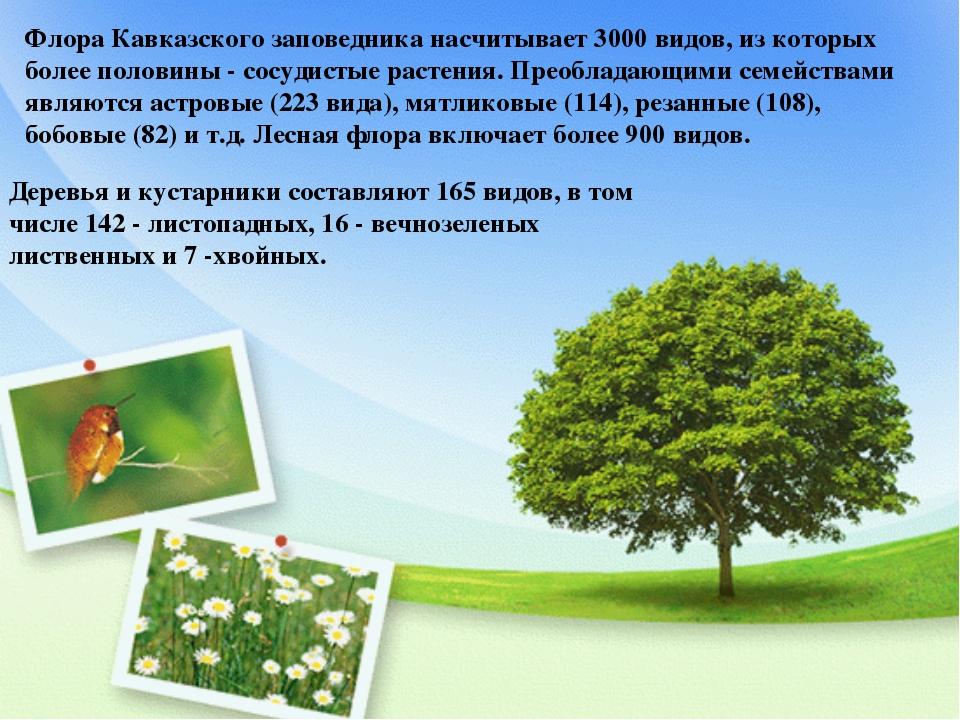 Флора Кавказского заповедника насчитывает 3000 видов, из которых более полови...
