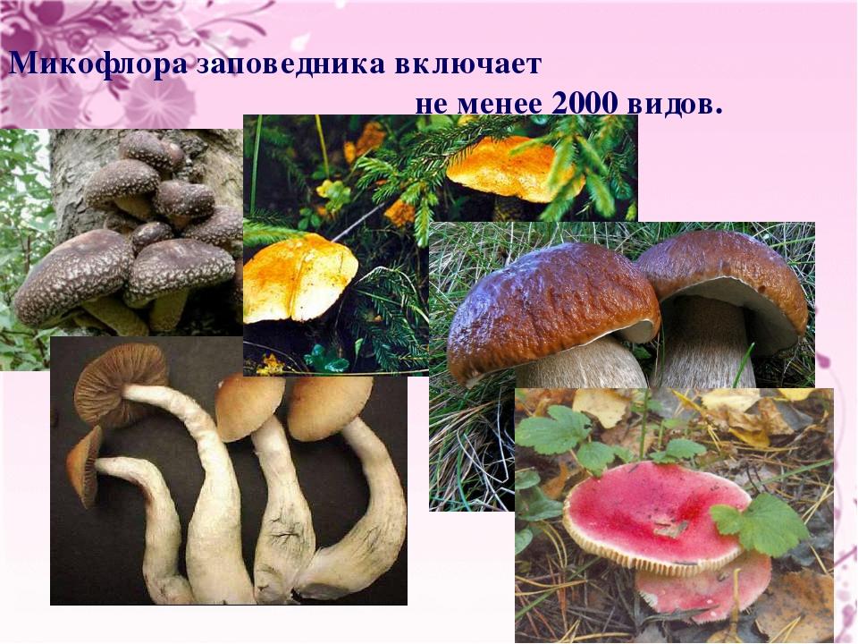 Микофлора заповедника включает не менее 2000 видов.