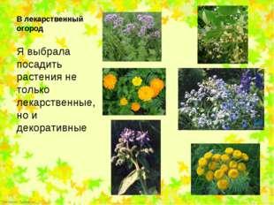 Я выбрала посадить растения не только лекарственные, но и декоративные Я выб